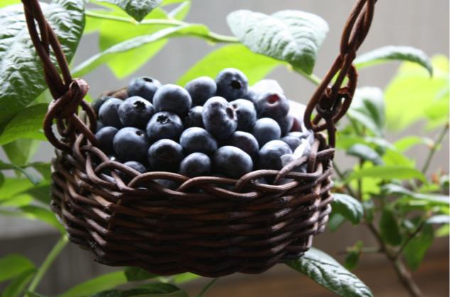 記憶力が向上する食べ物&飲み物10選1